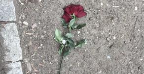 rose story