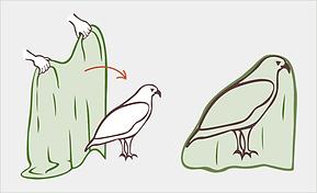 couvrir oiseaux.png