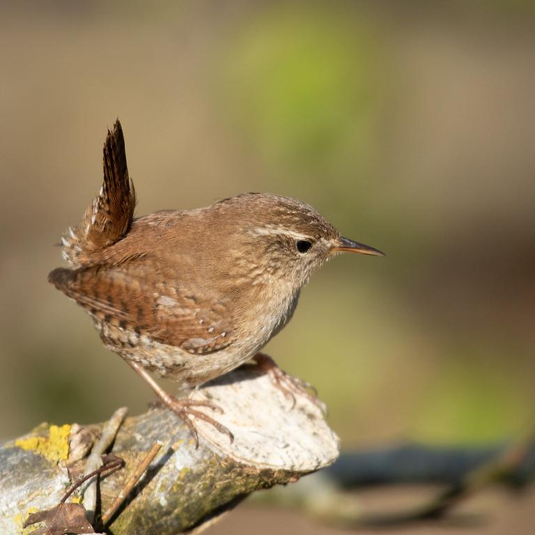 Week-end ornithologique dans la région des 3 vallées