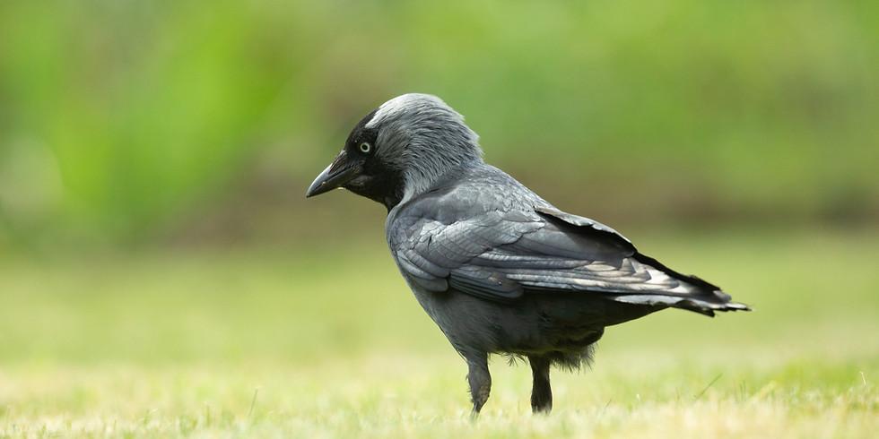Balade : Reconnaître le chant des oiseaux communs - Grez-Doiceau