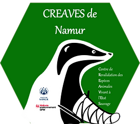 Logo creaves de Namur.png