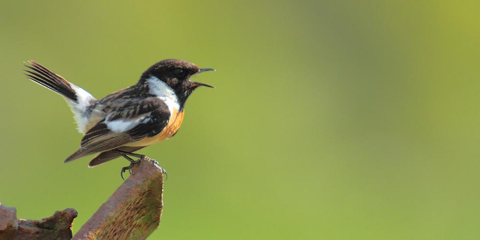 Balade : Oiseaux des bocages - Matagne-la-Petite