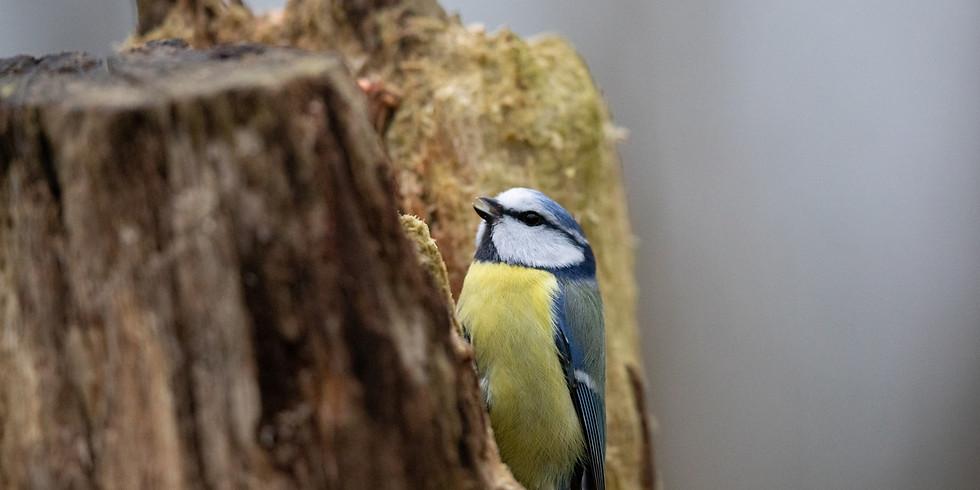 Balade : Reconnaître le chant des oiseaux communs