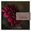 Thumbnail: Dahlia