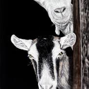 Cheeky Goats
