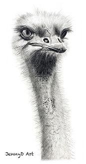 Ostrich - Graphite Pencil