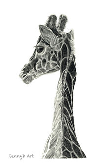 Giraffe - Graphite Pencil