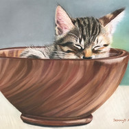 Cat in Bowl