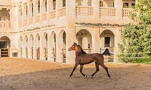 stables_2.jpg
