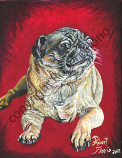 """ Pug on Red Background"""