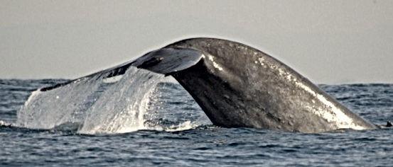 экскурсия по наблюдению за китами