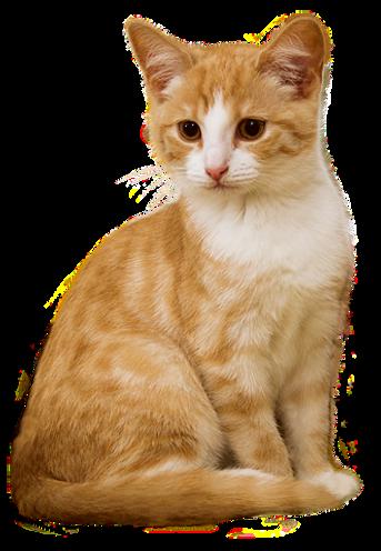 cat-2669554__480 - kopie - kopie.png