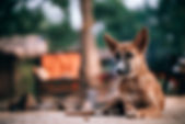animal-blurred-background-brown-955463.j