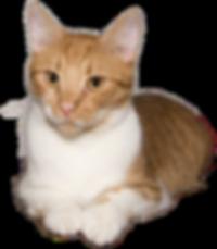 cat-2634641__480 - kopie - kopie.png