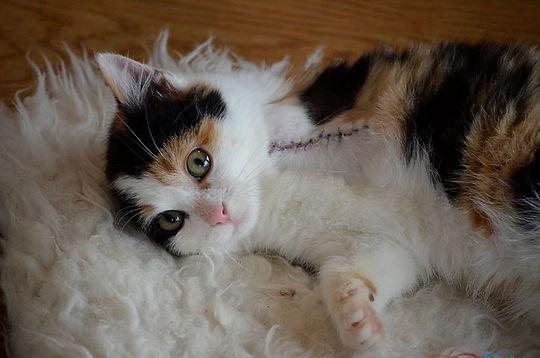 animal-welfare-2372093__480.jpg