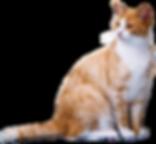 cat-2089916__480 - kopie - kopie.png