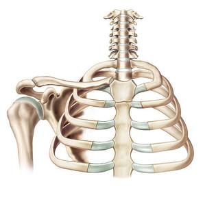 胸鎖関節、動かすといいことありすぎた