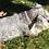 Thumbnail: Collier pour chien zigzag bleu et doré
