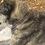 Thumbnail: Collier pour gros chien