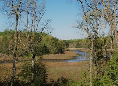 Gail's creek view.JPG