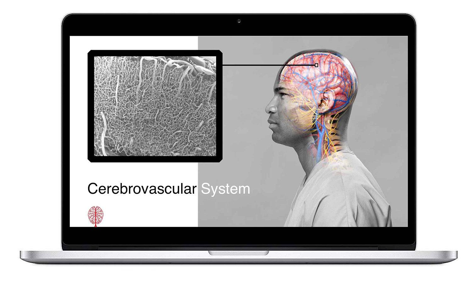 Neurological Diagnostics