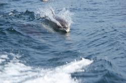 Dolphin Safari in Sesimbra