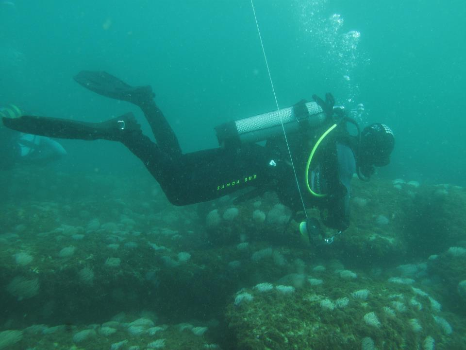 Diving in Cascais