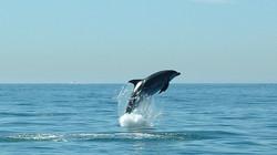Dolphin Safari in Cascais
