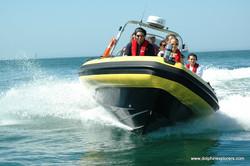 Dolphin safari Speed boat