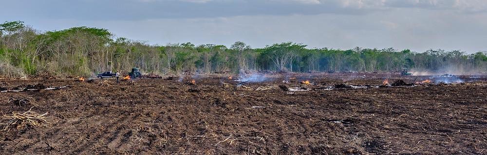Deforestación de la selva en Hopelchén