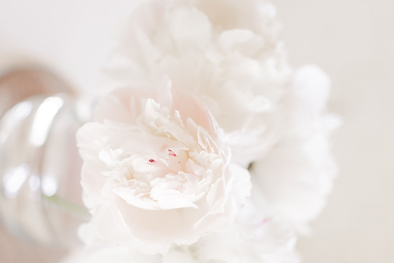 White%20Peonies%20in%20the%20Spring%20-%