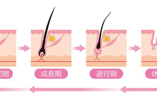 毛周期って?サロンに通うおすすめの頻度とは?