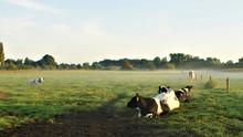 Kalbfleisch vom Biohof Ries