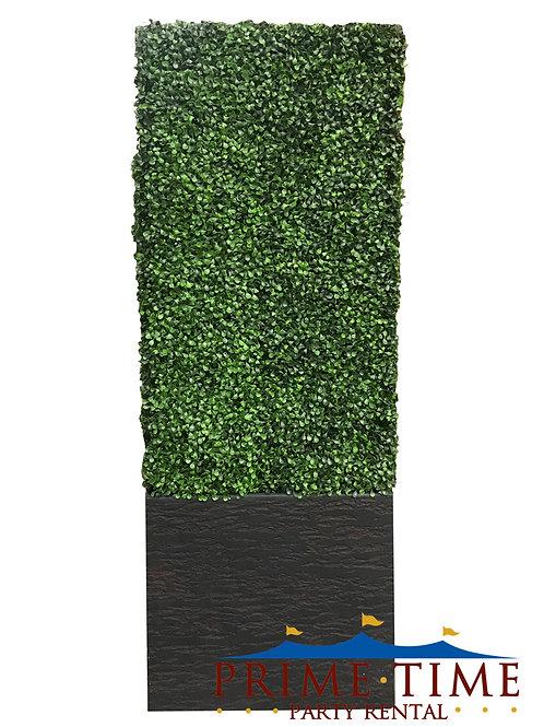 Boxwood Hedge Medium