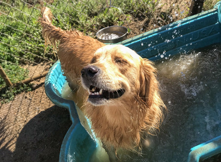 5 Tips For Keeping Your Dog Cool In The Summer Heat