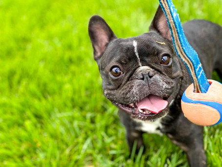 Tips on Taking Pet Photos with Your Phone