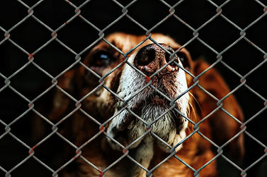 כלב בהסגר