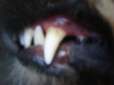 tooth 1.jpg