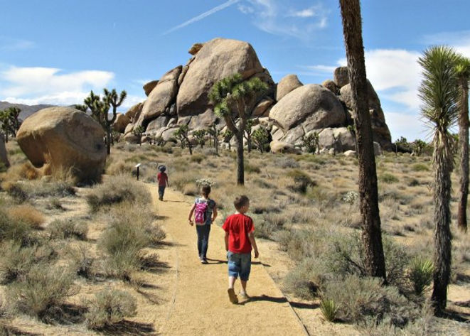 joshua_tree_cap_rock_nps_2.jpg
