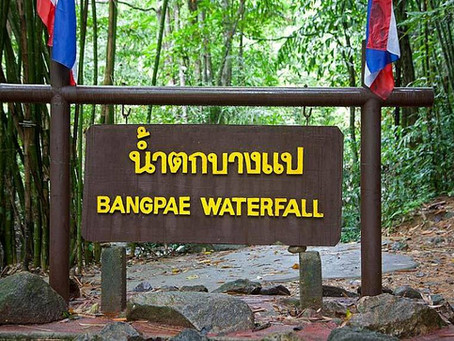 จุดที่ 07 น้ำตกบางแป ศูนย์อนุรักษ์ชะนี   Bang Pae Waterfall and The gibbon rehabilitation Project