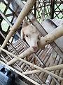 """จุดที่ 08 ฟาร์มแพะเดือนล้อมดาว Goat Farm """"Dean Lom Daw"""""""