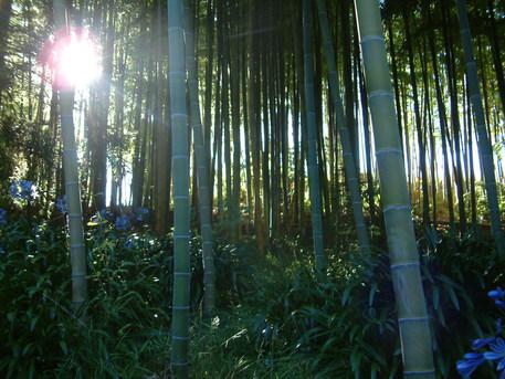 bamboo pheney rd jan 2014.JPG