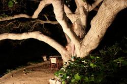 Fantasm of Hermit's Glen