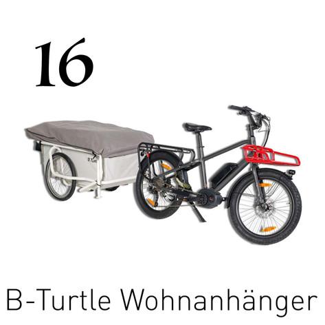 16_B-Turtle.jpg
