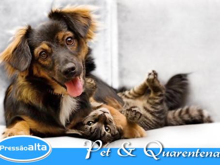 Pets, importantes companheiros !