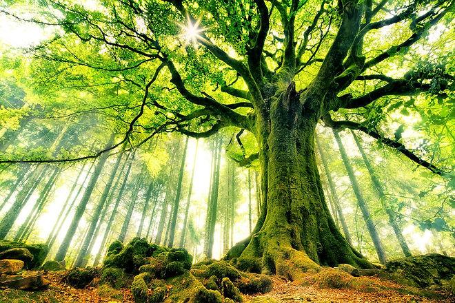 51337_forest_green_tree.jpeg