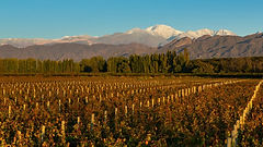 Wineries-in-Argentina-Upscape-tours-736x