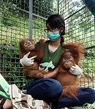 indonesiaanimals_edited.jpg