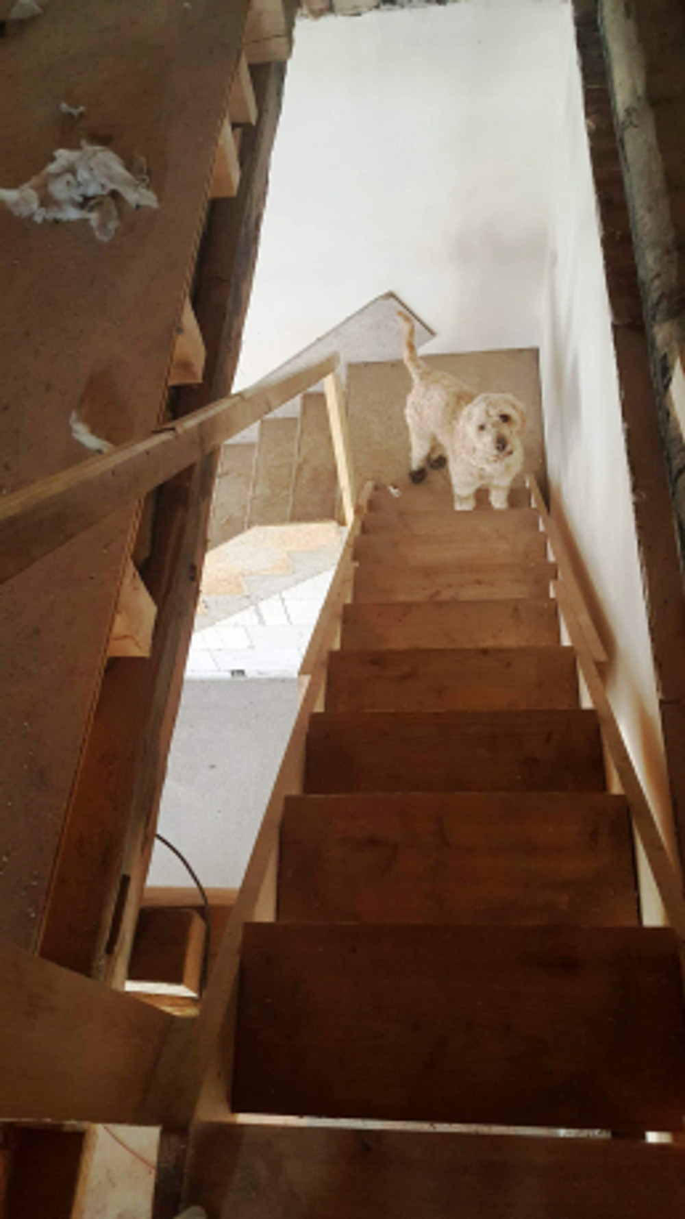 Fido on the stairs