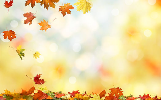 Falling autumn maple leaves natural background .Colorful foliage .jpg